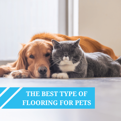 The Best Type of Flooring For Pets